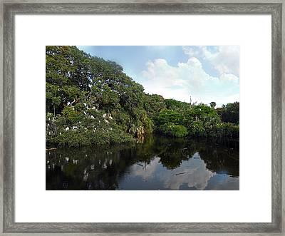 Birds N Gators Framed Print by Skip Willits
