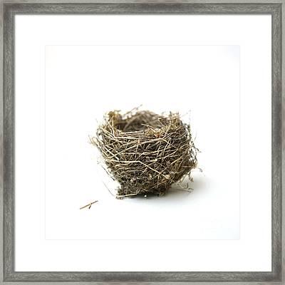 Bird's Nest Framed Print by Bernard Jaubert