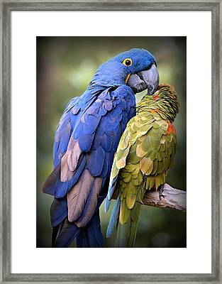 Birds Of A Feather Framed Print by Stephen Stookey