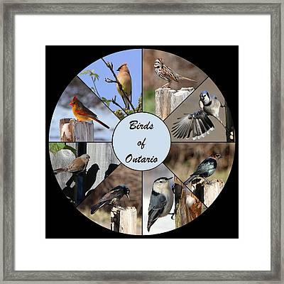 Birds Of Ontario Framed Print by Davandra Cribbie