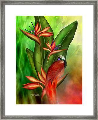 Birds Of Paradise Framed Print by Carol Cavalaris