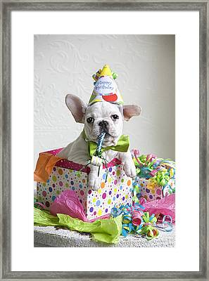 Birthday In A Box Framed Print by Lisa Jane