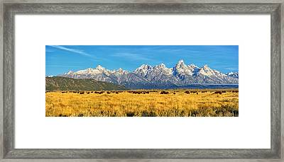 Bison Beneath The Tetons Panorama Framed Print by Greg Norrell
