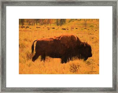 Bison Framed Print by Jo-Anne Gazo-McKim