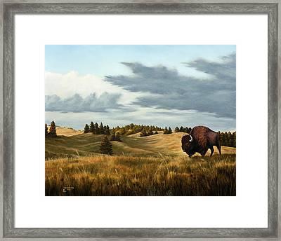 Bison  Wind Cave Park  South Dakota Framed Print by Rick Bainbridge