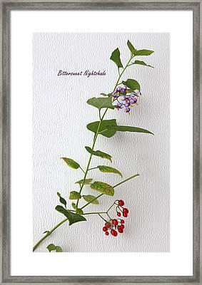 Bittersweet Nightshade Framed Print by Angie Vogel