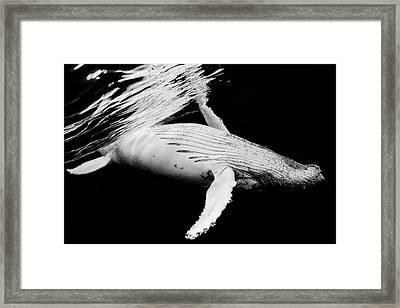 Black & Whale Framed Print by Barathieu Gabriel