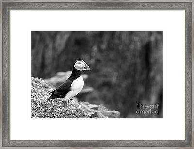 Black And White Black And White Bird Framed Print by Anne Gilbert
