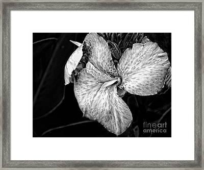 Black And White Canna Flower Framed Print by Eva Thomas