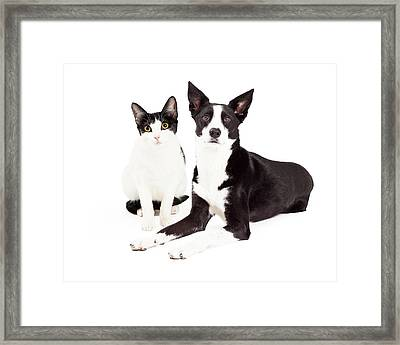Black And White Cat And Dog Framed Print by Susan Schmitz