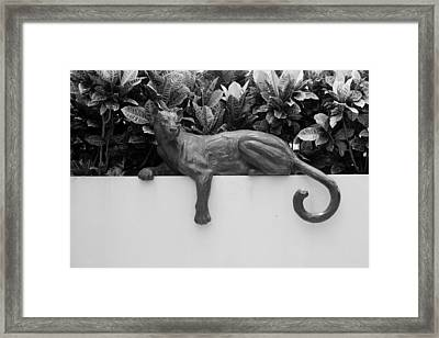 Black And White Cat Framed Print by Rob Hans