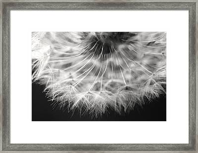 Black And White Dandelion  Framed Print by Jill Blackwood