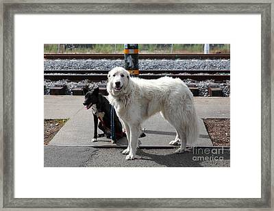 Black And White Dogs 5d25873 Framed Print by Wingsdomain Art and Photography
