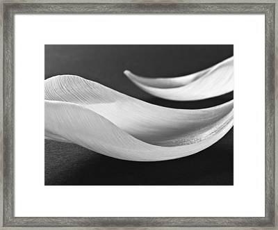 Abstract Black And White Flowers Art Work Photography Framed Print by Artecco Fine Art Photography