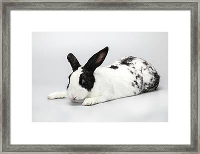 Black And White Pet Rabbi Framed Print by Photostock-israel