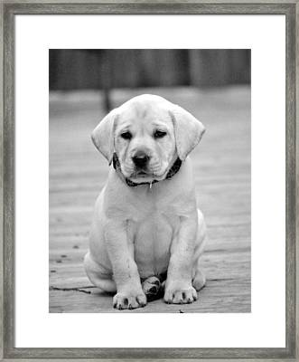 Black And White Puppy Framed Print by Kristina Deane