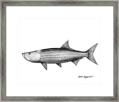 Black And White Tarpon Framed Print by Steve Ozment