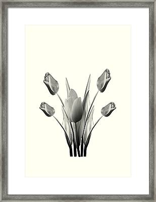 Black And White Tulips Drawing Framed Print by David Dehner
