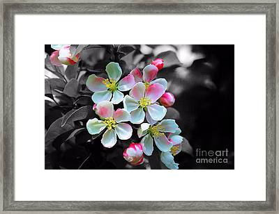Black And White With Color. No.2 Framed Print by RL Clough