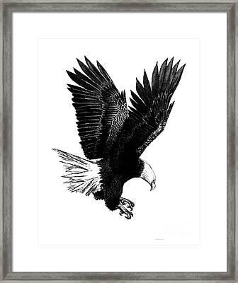 Black And White With Pen And Ink Drawing Of American Bald Eagle  Framed Print by Mario Perez