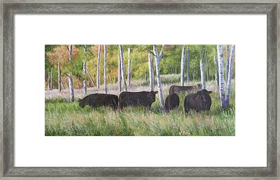 Black Angus Grazing Framed Print by Tammy  Taylor