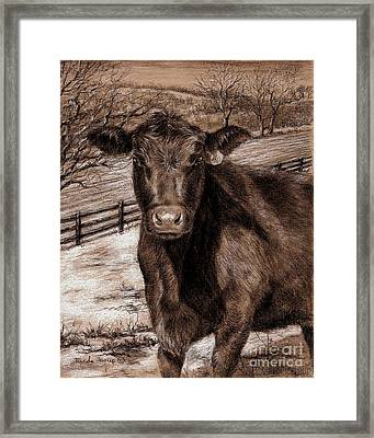 Black Angus In The Field Framed Print by Nicole Troup