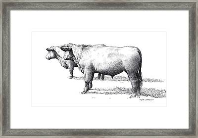 Black Angus Steers On Almshouse Road Framed Print by William Beauchamp