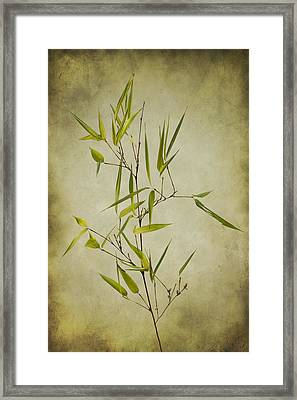 Black Bamboo Stem. Framed Print by Clare Bambers