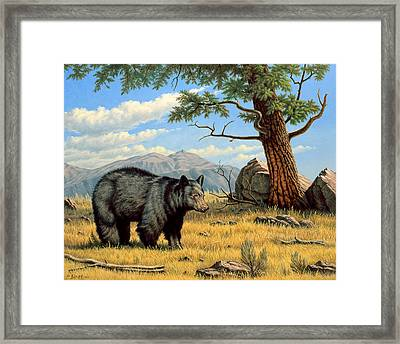 Black Bear Above Lamar Framed Print by Paul Krapf