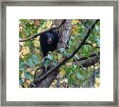 Black Bear Framed Print by Dan Sproul
