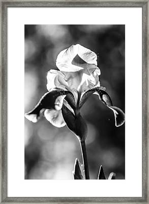 Black Beauty. Iris Series. Black And White Framed Print by Jenny Rainbow