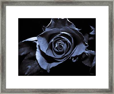 Black Blue Rose Framed Print by Yvon van der Wijk