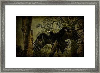 Black-breasted Buzard Framed Print by Shari Mattox