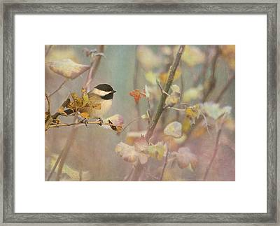 Black-capped Chickadee Framed Print by Angie Vogel