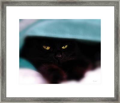 Black Cat Secrets Framed Print by Bob Orsillo