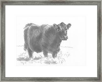 Black Cow Pencil Sketch Framed Print by Mike Jory