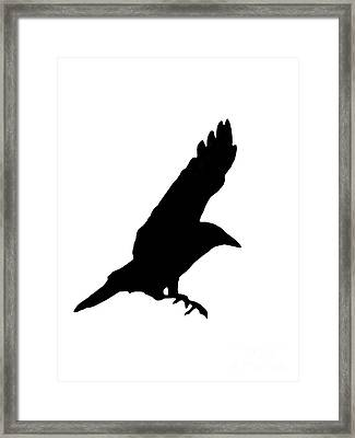 Black Crow On White Framed Print by Linsey Williams
