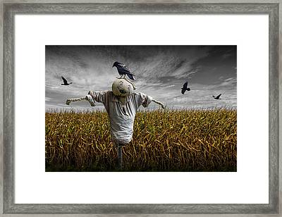 Black Crows Over A Cornfield With Scarecrow And Gray Sky Framed Print by Randall Nyhof