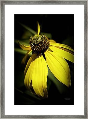 Black Eyed Susan 3 Framed Print by Julie Palencia