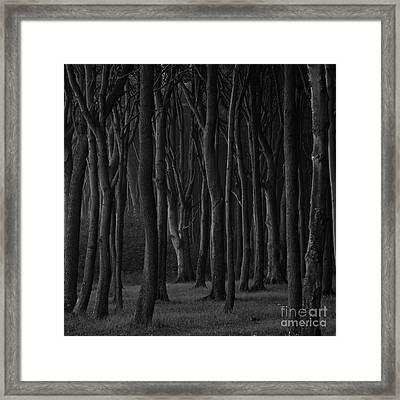 Black Forest Framed Print by Heiko Koehrer-Wagner