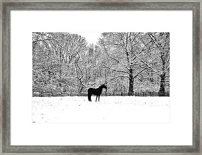 Black Horse In The Snow Framed Print by Bill Cannon