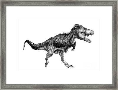 Black Ink Drawing Of Albertosaurus Framed Print by Vladimir Nikolov