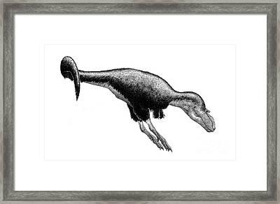 Black Ink Drawing Of Gorgosaurus Framed Print by Vladimir Nikolov