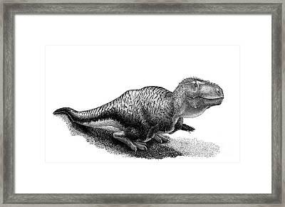 Black Ink Drawing Of Tarbosaurus Bataar Framed Print by Vladimir Nikolov