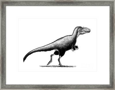 Black Ink Drawing Of Teratophoneus Framed Print by Vladimir Nikolov