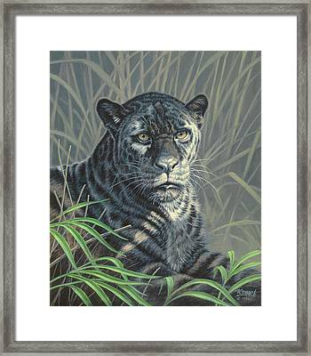 Black Jaguar Framed Print by Paul Krapf