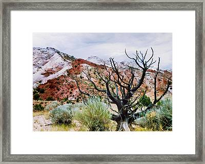 Black Juniper Framed Print by Kathleen Bishop