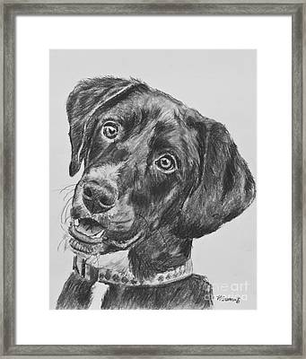 Black Lab Puppy Charcoal Sketch Framed Print by Kate Sumners