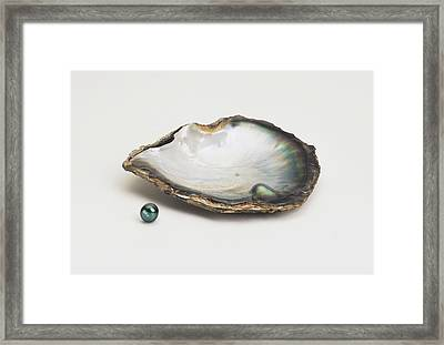 Black-lipped Pearl Oyster And Black Pearl Framed Print by Dorling Kindersley/uig