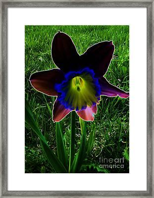 Black Narcissus Framed Print by Martin Howard